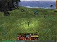 Multiboxing in EverQuest 2 (1 Spieler 6 Accounts)
