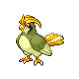 Pokémon Pokédex Nummer 17 Tauboga Shiny
